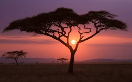 african_sunset-wide