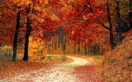 autumn-wide