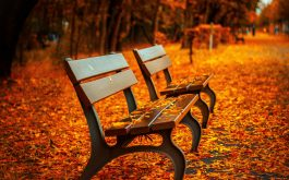 autumn_bench-HD