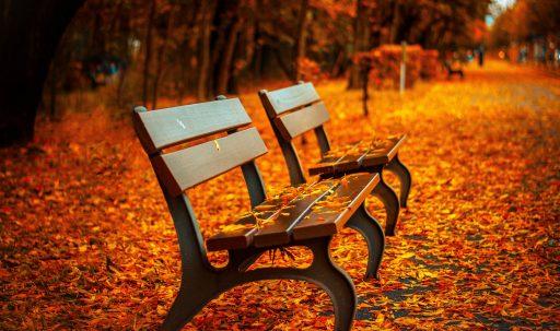 autumn_bench-HD