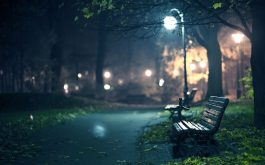 bench-night-park-pathway-trees-2560x1600