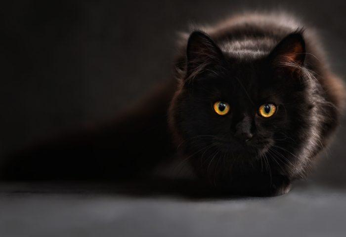 black_cat-HD
