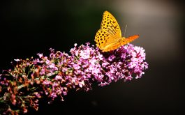 butterfly_in_botanic_garden-wide
