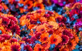 colorful-flowers-blurred-background-1920x1200
