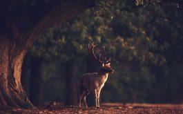 deer-photo-1920x1080