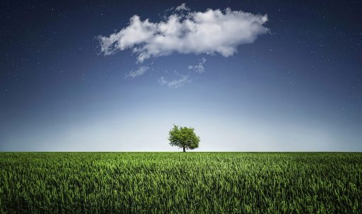 green_tree_alone-wide