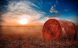 hay-rolls-field-1920x1200