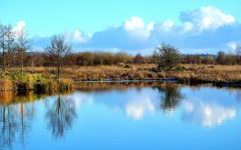 lake_grass_reflection-1920x1080