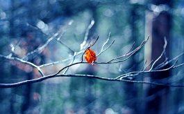 winter_tree_leaf-wide