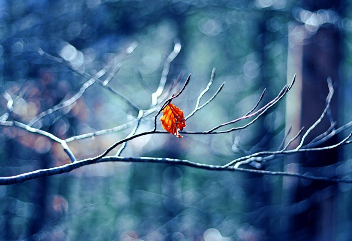winter_tree_leaf-wide