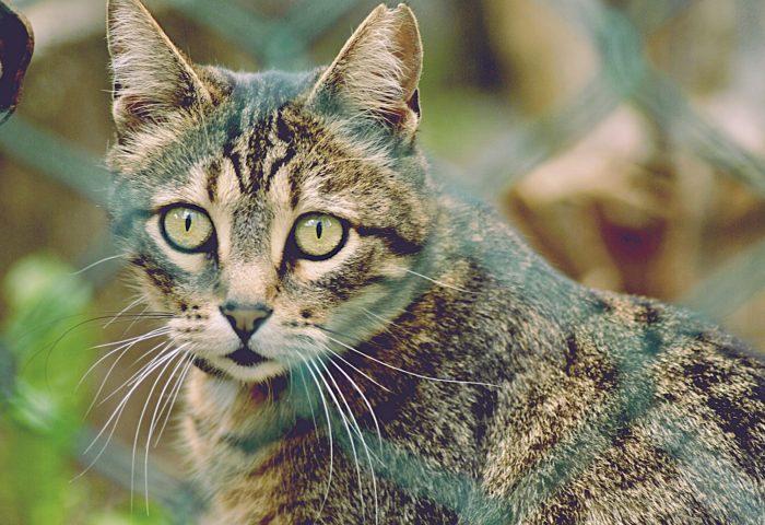 cat_mesh_striped_view-1920x1080