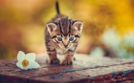 kitten-wooden-chair-flower-1920x1200