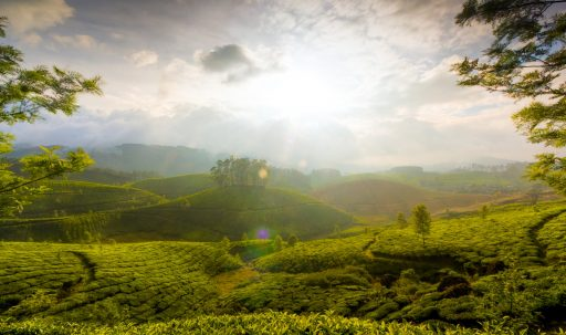 munnar_hills_kerala_india-1920x1200