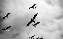 birds_sky_flight_clouds-1920x1080
