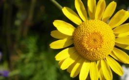 flower_yellow_petals-1920x1080