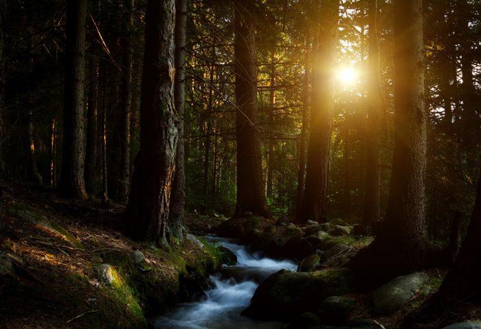 forest_water_stream-1920x1080