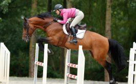jumper-horse-1920x1080