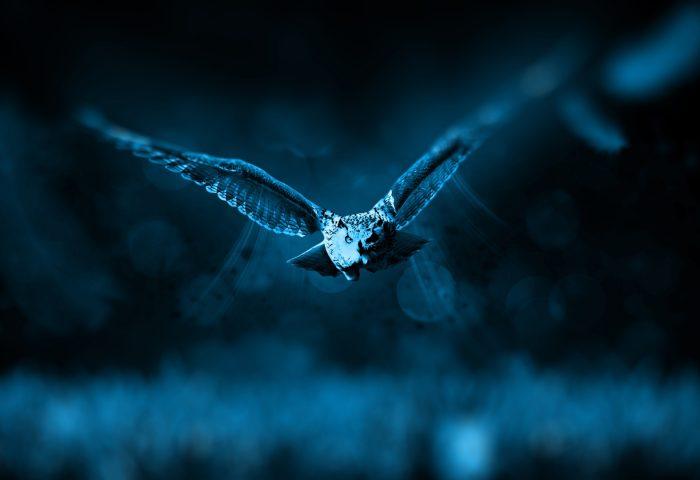 night_owl-1920x1080