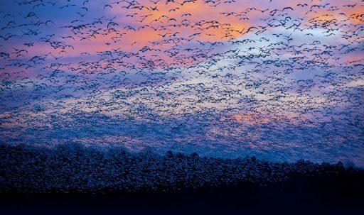 quebec_canada_bird_flock_flying-1920x1080