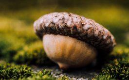 acorn_seed_close_up-1920x1080