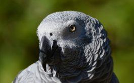 african_parrot_bird_beak-1920x1080