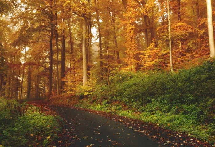 autumn_trees_forest_trail-1920x1080