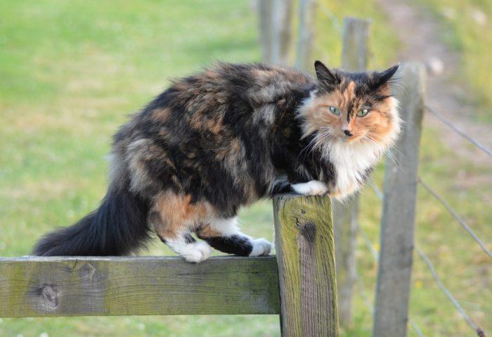 cat_spotted_walk-1920x1080