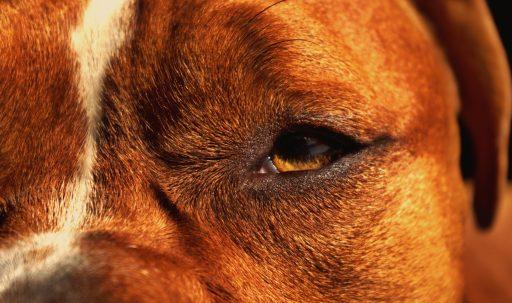 dog_face_eyes_close_up-1920x1080