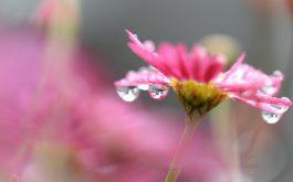 flower_macro_drops_blur-1920x1080