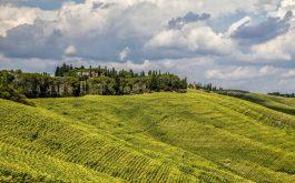grass_field_hill-1920x1080