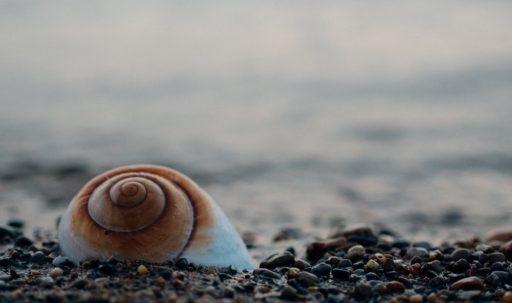 shell_sea_stones-1920x1080