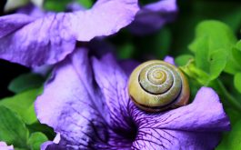 snail_clam_flower_shell-1920x1080