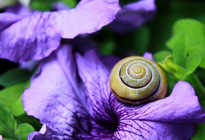 snail_clam_flower_shell-1920x1080