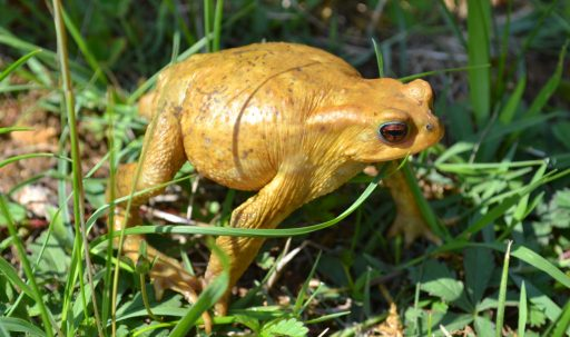 toad_amphibian_frog_grass-1920x1080
