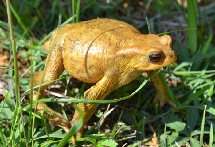 toad_amphibian_frog_grass-1920x1080