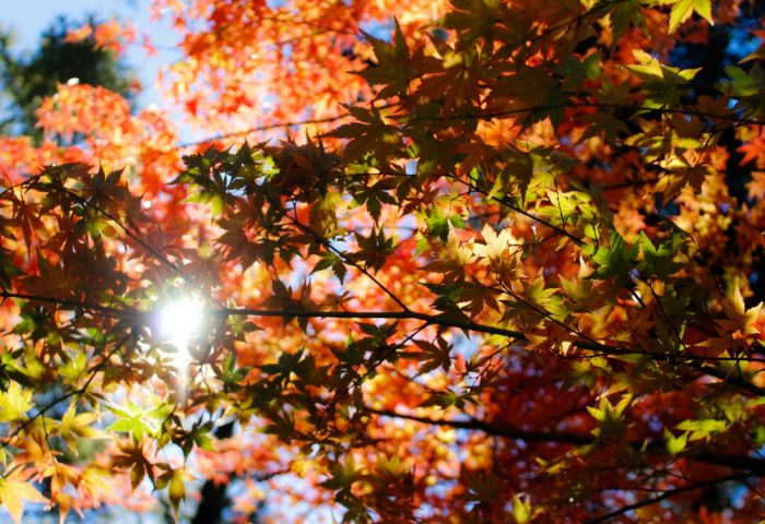autumn_foliage_trees_sunlight-1920x1080