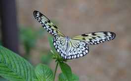 butterfly_wings_flapping_plant-1920x1080