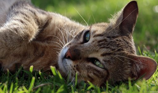 cat_face_lying_grass_vacati-1920x1080