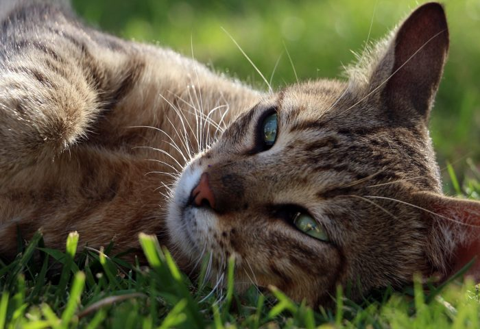 cat_face_lying_grass_vacati-1920x1080