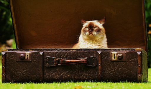 cat_suitcase_antiques-1920x1080