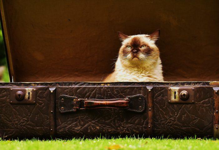 cat_suitcase_antiques-1920x1080