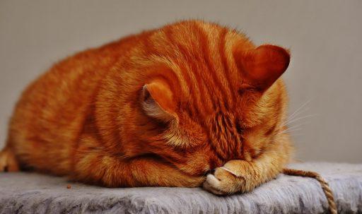 cat_tabby_lying-1920x1080
