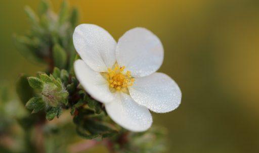flower_macro_petals-1920x1080