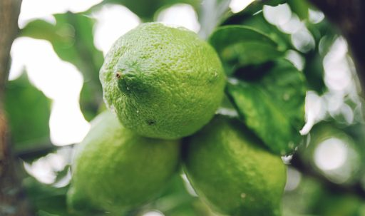 lime_citrus_branch_fruit-1920x1080