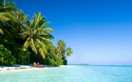 maldives_tropical_beach_palm_trees_summer-1920x1080