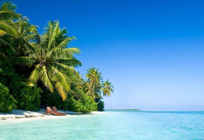 maldives_tropical_beach_palm_trees_summer-1920x1080