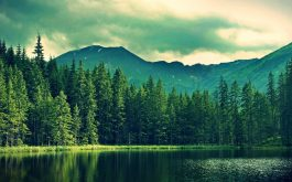 mountains_summer_lake_trees_forest-1920x1080