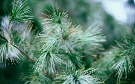 spruce_tree_branches_needles-1920x1080