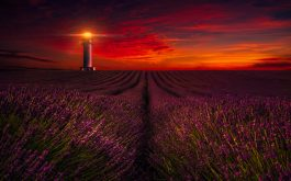 sunset_lavender_field_lighthouse_5k-1920x1080