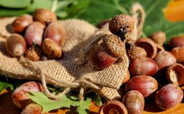 acorns_bag_nuts-1920x1080